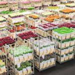 Duurzaam Lean door ketenaanpak logistiek bij Flora Holland